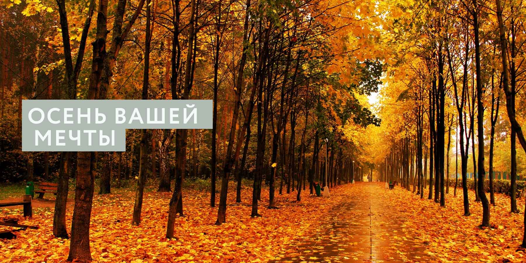 Осень вашей мечты: как подготовиться морально и физически